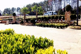 beautiful day at Georgia wholesale Nursery LOCATED ON LAWRENCEVILLE HWY