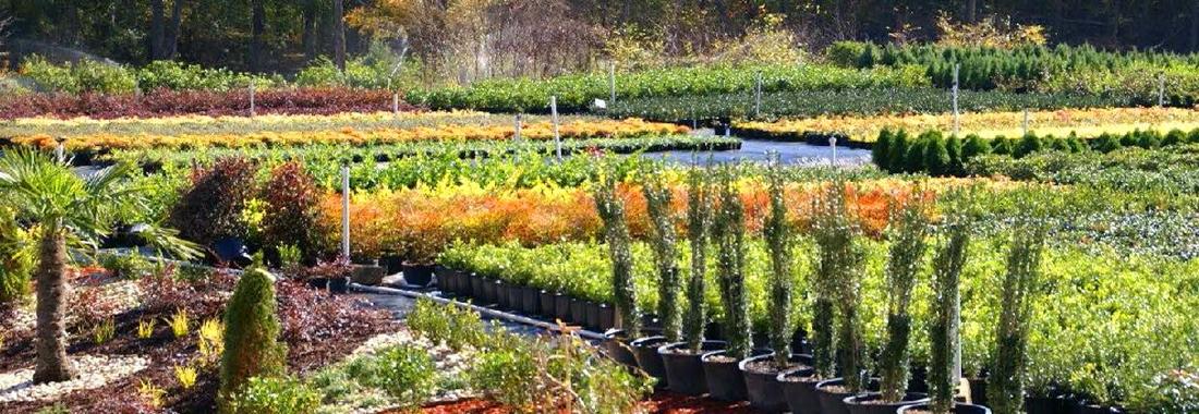 Premier-Plant-landscaping-Wholesaler