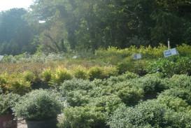 Bushes and shrubs for sale in Atlanta GA (5)