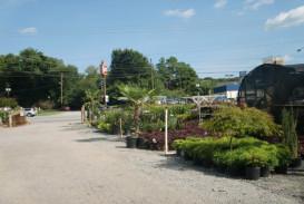 Bushes and shrubs for sale in Atlanta GA (6)