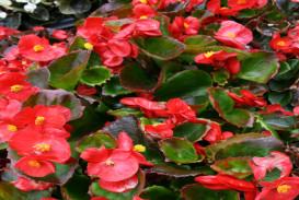 Flowers in Atlanta Georgia (2)