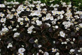 Flowers in Atlanta Georgia (4)