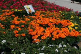 Flowers in Atlanta Georgia (5)
