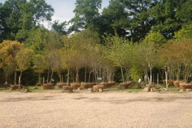 Trees for sale in Georgia (1)