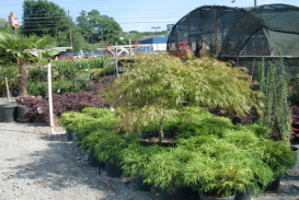 Trees for sale in Georgia (8)
